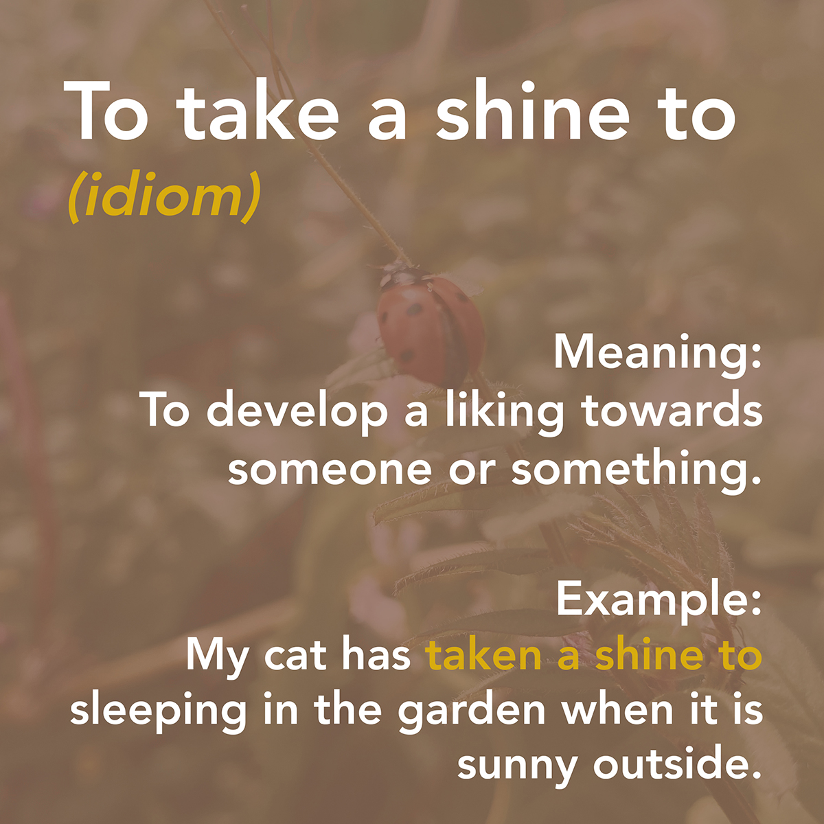 Summertime Vocabulary 4